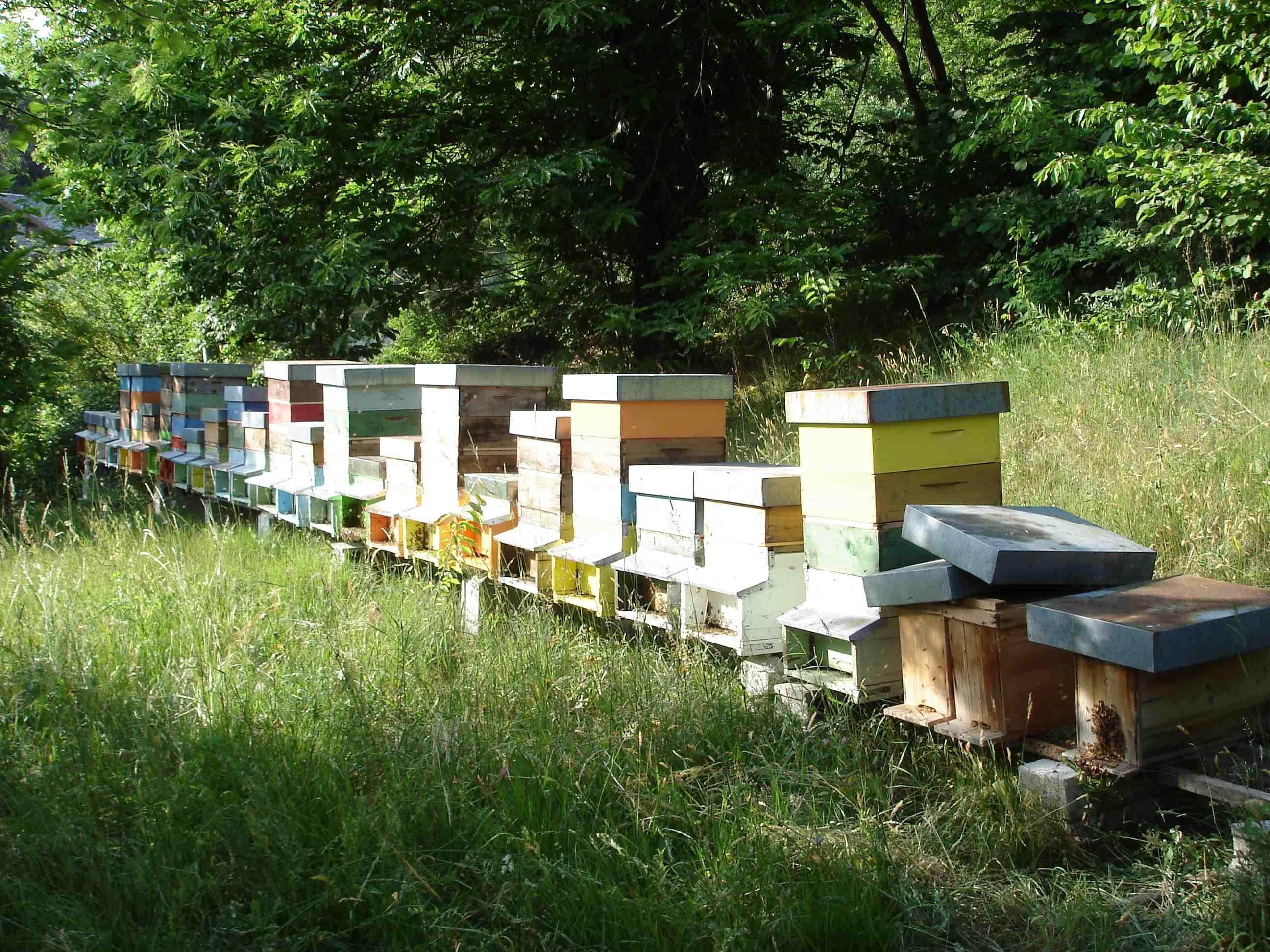 Fogli cerei per apicoltori con celle con misure su richiesta