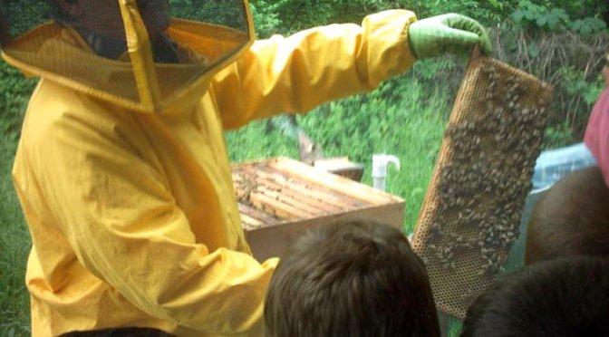 Lezioni pratiche in apiario